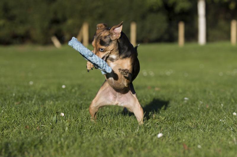 Hundespielzeug Skipper