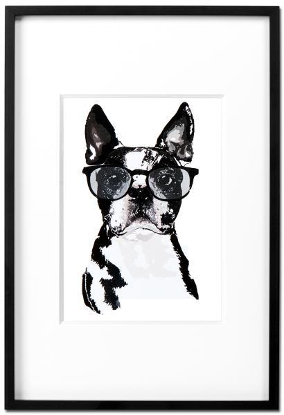Boston Terrier Churchill - Kunstdruck